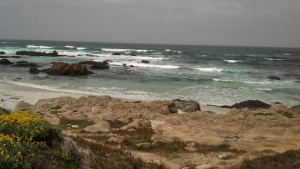Here's a picture of the ocean and rocks from a trip to Monterey, where The Mermaid's Curse is set.